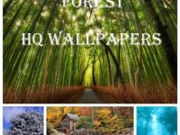 Forest Wallpapers Pack – 2